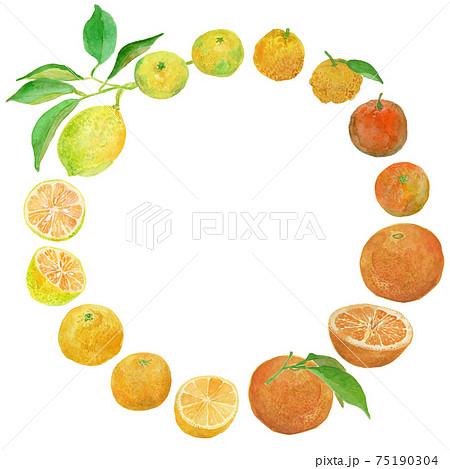 柑橘類(レモン、みかん、ゆず、だいだい、夏みかん、湘南ゴールド)のリースの水彩イラスト 75190304