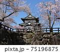 弘前城の桜 75196875