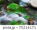 清流と水苔 75214171