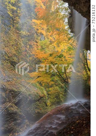 長野_紅葉した松川渓谷の雷滝(裏見の滝) 75216132