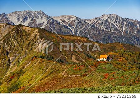 爺ヶ岳の登りから見る紅葉の種池山荘と立山連峰 75231569