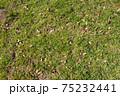 春の草原の素材 75232441