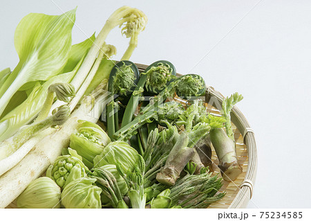 ザルに盛られた山菜 75234585