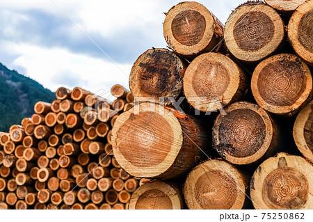 集積された木材 75250862