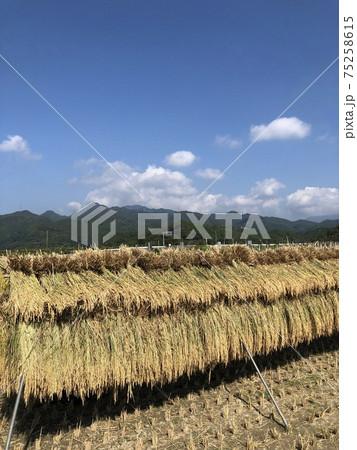 秋の空とはざ掛けされた稲と遠くの山々 75258615