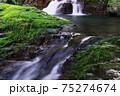 清流と水苔 75274674