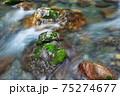 清流と水苔 75274677