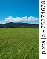 稲刈り 75274678
