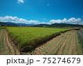 稲刈り 75274679