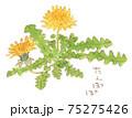 春の便り:たんぽぽの水彩イラスト 75275426