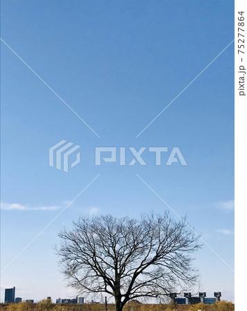 河川敷、青空と大樹のシルエットと遠景の町と水門 75277864