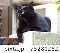 黒猫 クロネコ くろねこ 75280282