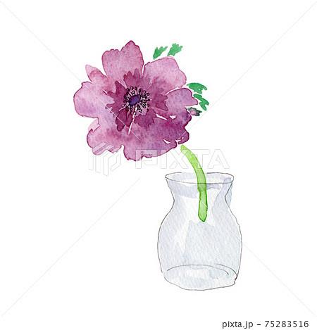 ガラスの花瓶に生けたアネモネの花の水彩イラスト 75283516