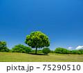 新緑と青空(安比奈親水公園) 75290510