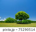 新緑と青空(安比奈親水公園) 75290514