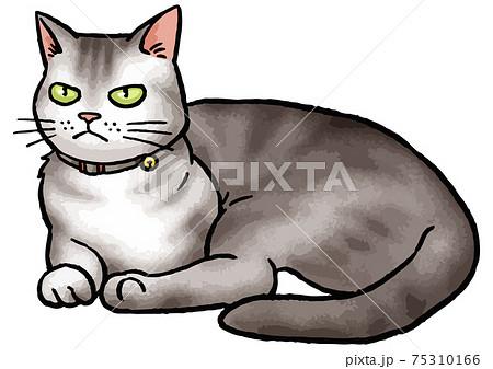 【手描きベクター動物イラスト素材】座っている猫(アメリカンショートヘア)のイラスト 75310166