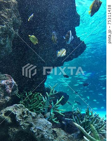 池袋 サンシャイン水族館の水槽で泳ぐ魚 75311438