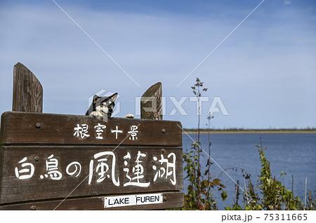 風蓮湖と黒柴 75311665