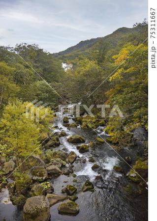 熊の湯から見る秋の羅臼川 75311667