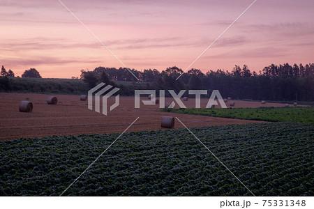 夏の朝焼け空と麦稈ロールのある風景 75331348