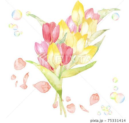 チューリップの花束 春の水彩イラスト 複数バリエーションあります 75331414