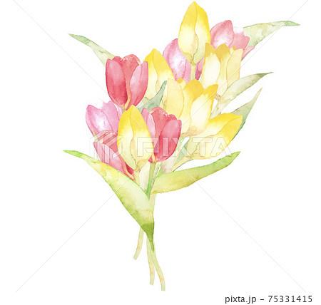 チューリップの花束 春の水彩イラスト 複数バリエーションあります 75331415