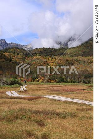 秋の湿原と雲の中の北アルプスと秋空 撮影場所:栂池自然園(長野県、中部山岳国立公園) 75336748