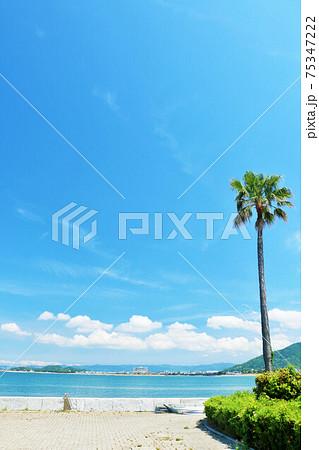 和歌山県 青空と青い海の公園 75347222