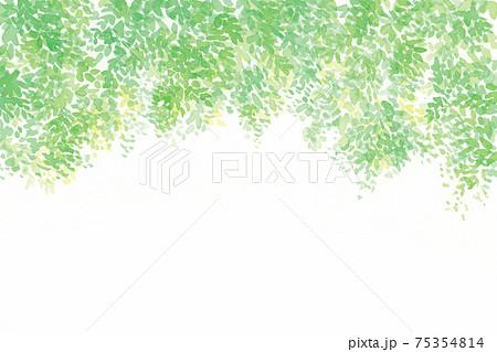 新緑 水彩イラスト 75354814