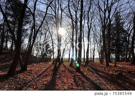 ロマンチック茨城(宮山ふるさとふれあい公園のどんぐりの林、宮山観音堂を包み込む。) 75365549