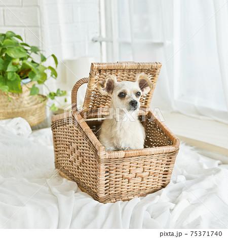 犬 動物 バスケット 75371740