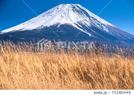 《静岡県》富士山・朝霧高原からの眺め 75380449