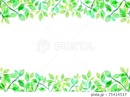 水彩で描いた新緑の背景イラスト 75414537