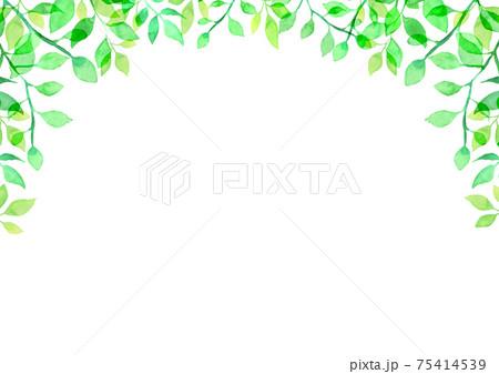 水彩で描いた新緑の背景イラスト 75414539