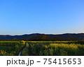 菜の花畑と綺麗な青空と山 75415653