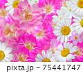白とピンク色の花寄せ 75441747