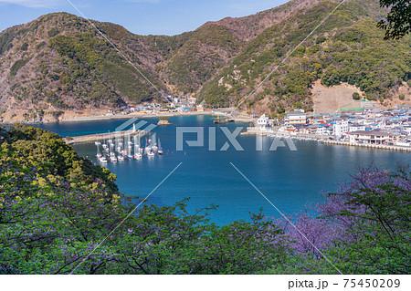 (静岡県)安良里港 75450209