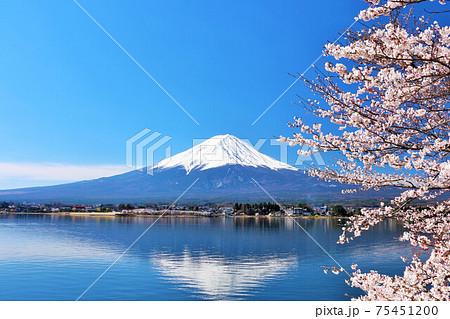 富士山と桜 75451200