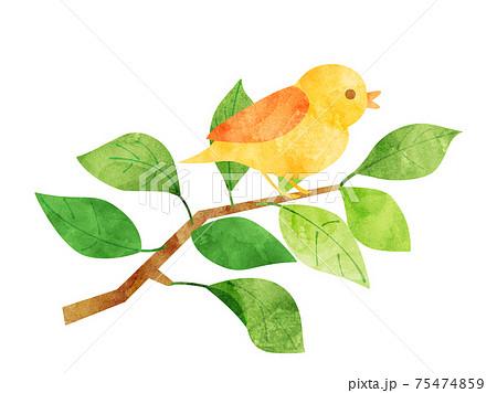 葉37 新緑 緑 枝 鳥 小鳥 水彩風 75474859