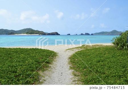 座間味の青い海19 阿真ビーチ付近 75484715