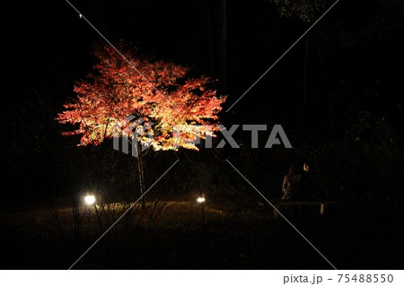 長瀞町月の石もみじ公園紅葉ライトアップの前で語り合うふたり 75488550