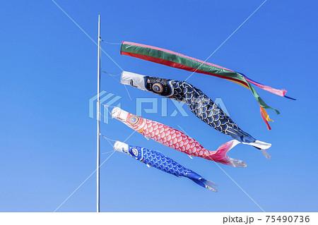 【日本の伝統】鯉のぼり 75490736