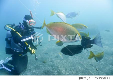 スクーバダイビング:ダイバーと海水魚 75495641
