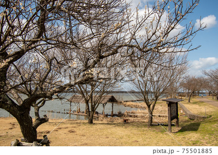 石川県小松市の木場潟公園船着き場 75501885