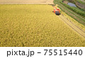 黄金色の田んぼと赤いコンバインと稲刈り 75515440
