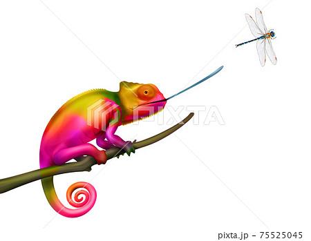 Chameleon Realistic Illustration 75525045