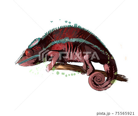 Chameleon from a splash of watercolor, colored drawing, realistic 75565921