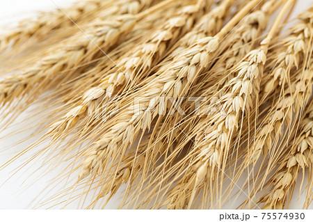 小麦 麦穂 75574930