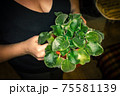 Woman with young violet plant in pot 75581139