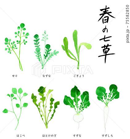 春の七草 七草がゆ 水彩イラスト 75582850